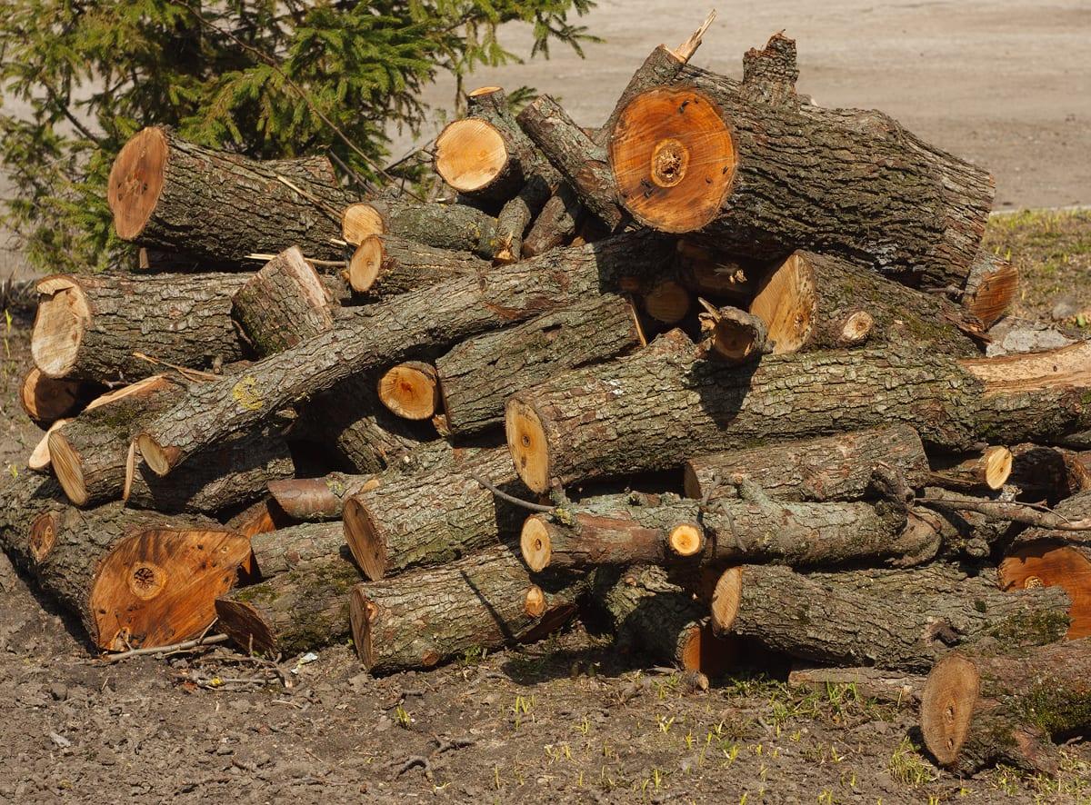 Tree Debris Removal